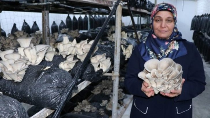 Kayserili üretici mantar tohumu üretimine hazırlanıyor
