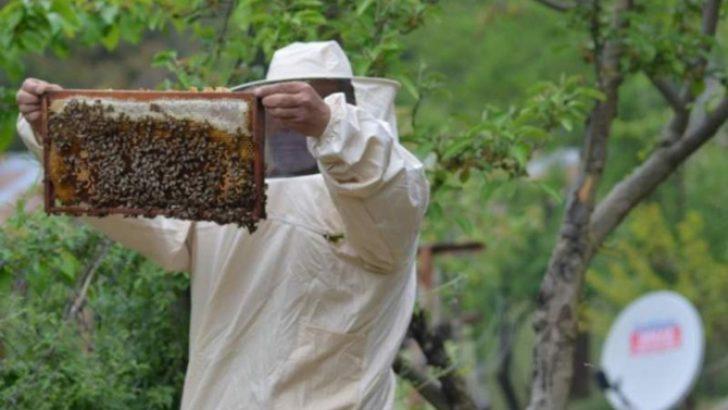 Organik arıcılara kovan başına 10 lira destek